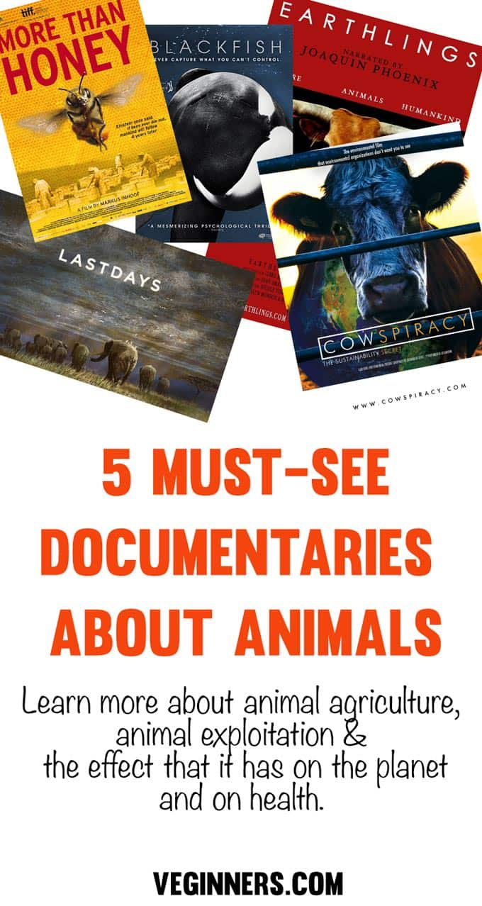 5 Must-See Documentaries About Animals #veginners #vegan #documentaries #films