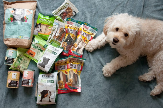 dog with vegan dog food and treats
