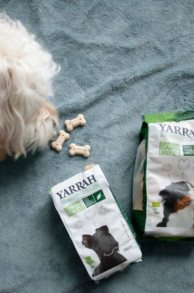 dog eating yarrah organic biscuits